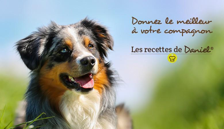 Croquettes chiens